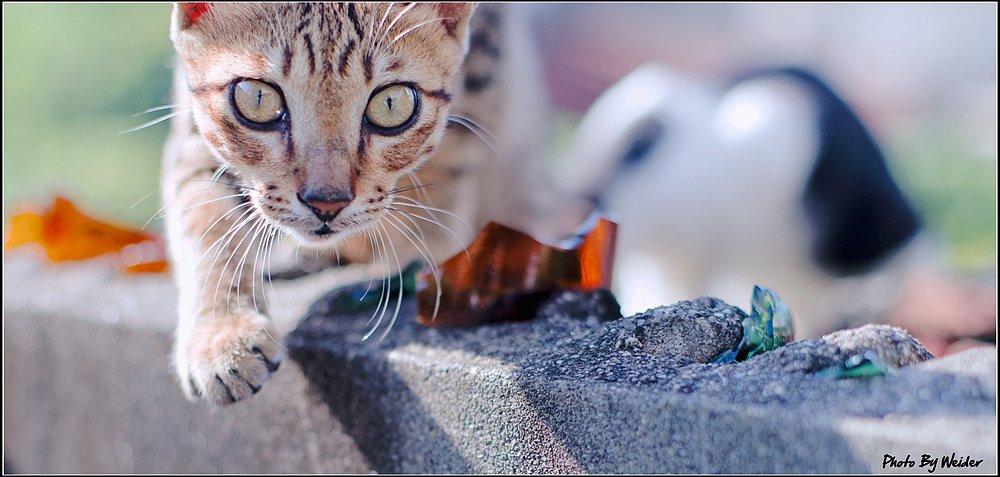 cat-20150909-07.jpg