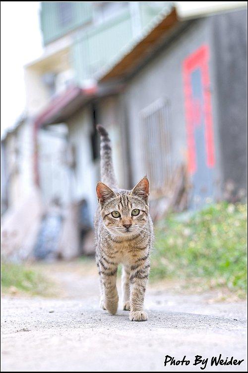cat-20170205-01.jpg
