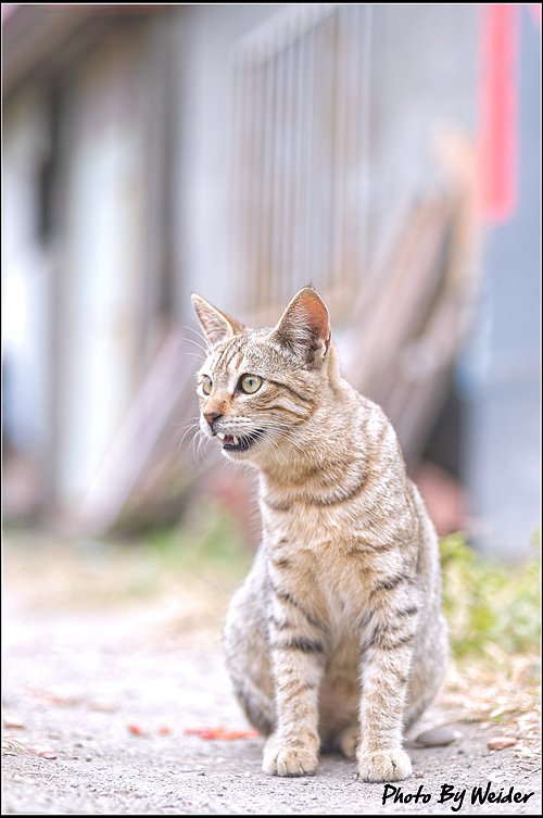 cat-20170205-02.jpg
