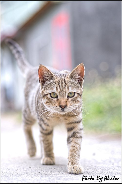 cat-20170205-04.jpg