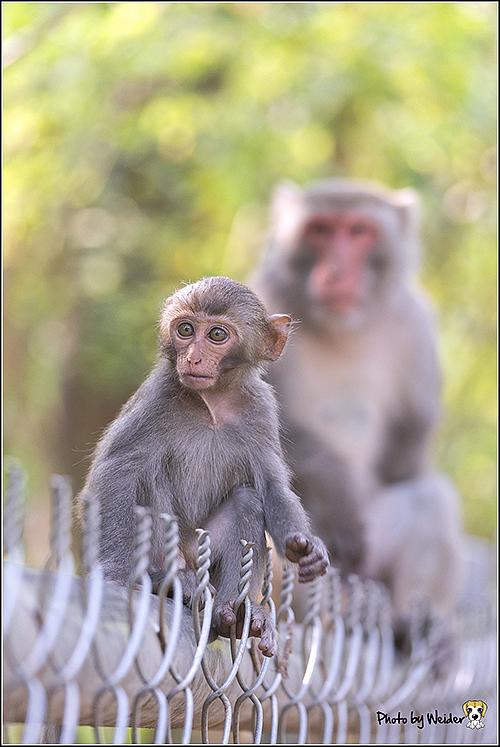 monkey-20170317-01.png