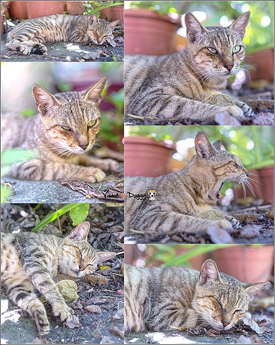 pic-20180730-cat.png