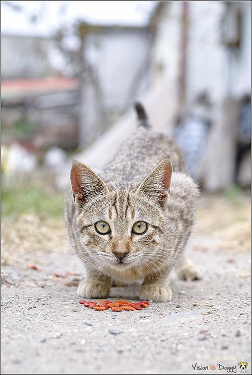 cat-20170205-05.png