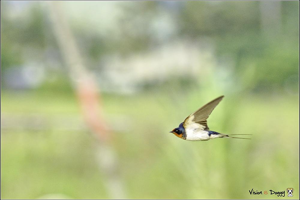 pic-20130506-u-01-bird.png